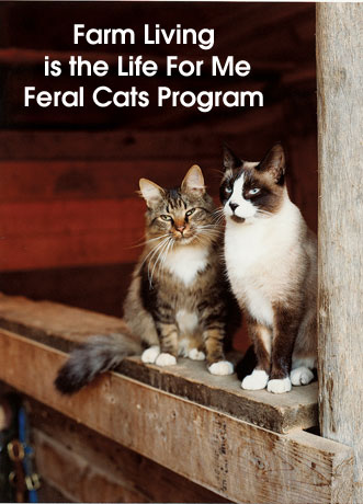 Farm Living Feral Cats copy